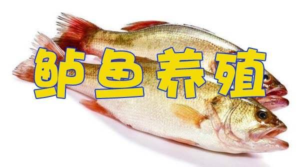 鲈鱼的养殖技术资源下载