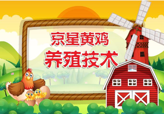 京星黄鸡的养殖技术