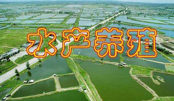 水产养殖养鲫鱼电子书大全人工养殖鲫鱼技巧资料下载